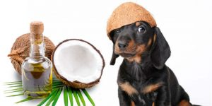 best-coconut-oil-for-dogs