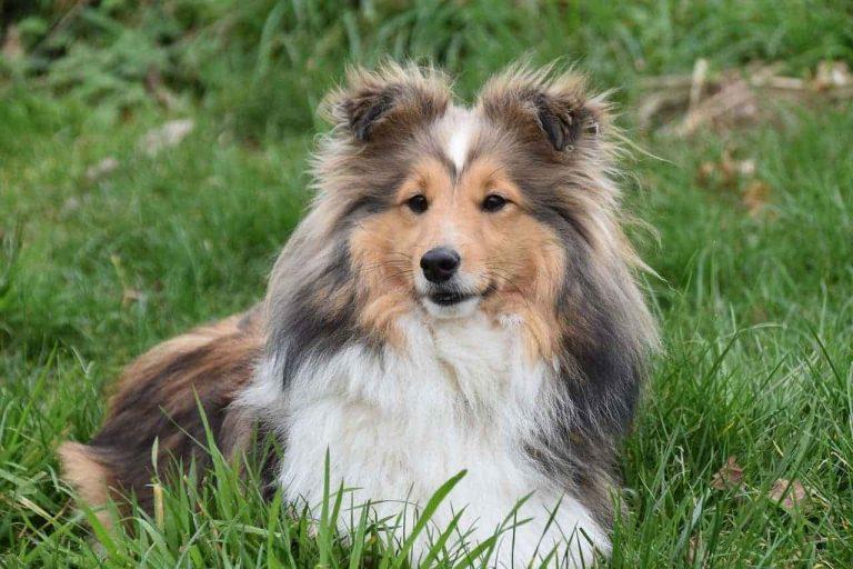 Dog Food For Arthritis