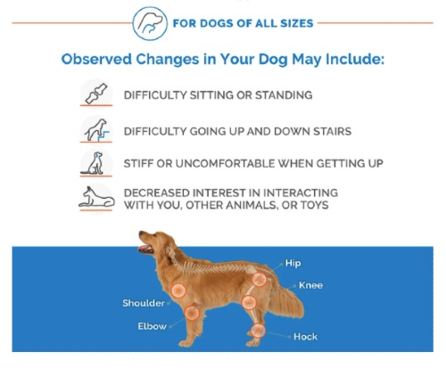 Joint Pain in Dogs