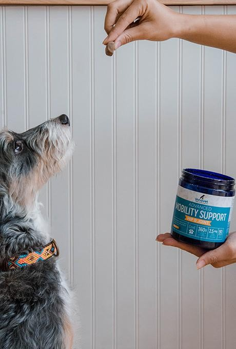 Feeding senior dog with hip and joint supplement chew
