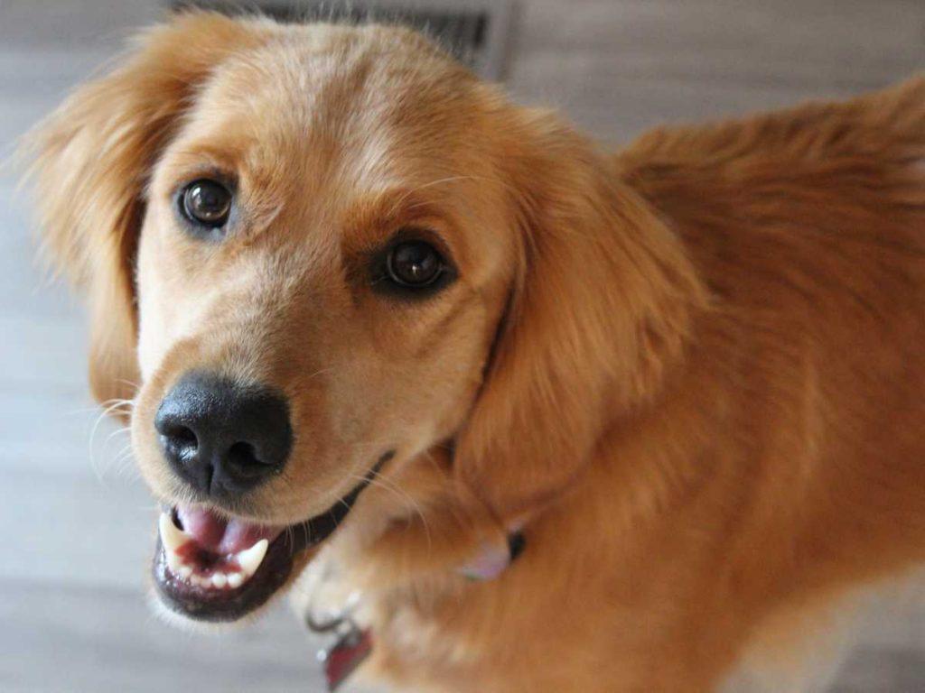 senior dog need supplement