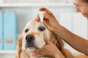 Dog eye drops