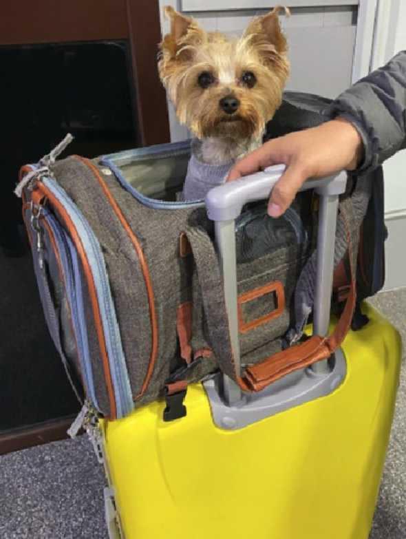Airline Approved Dog Carrier Bag