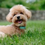 Dog Food with Glucosamine Chondroitin MSM