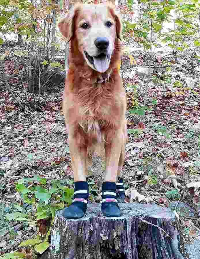 Dog Boots for Hiking