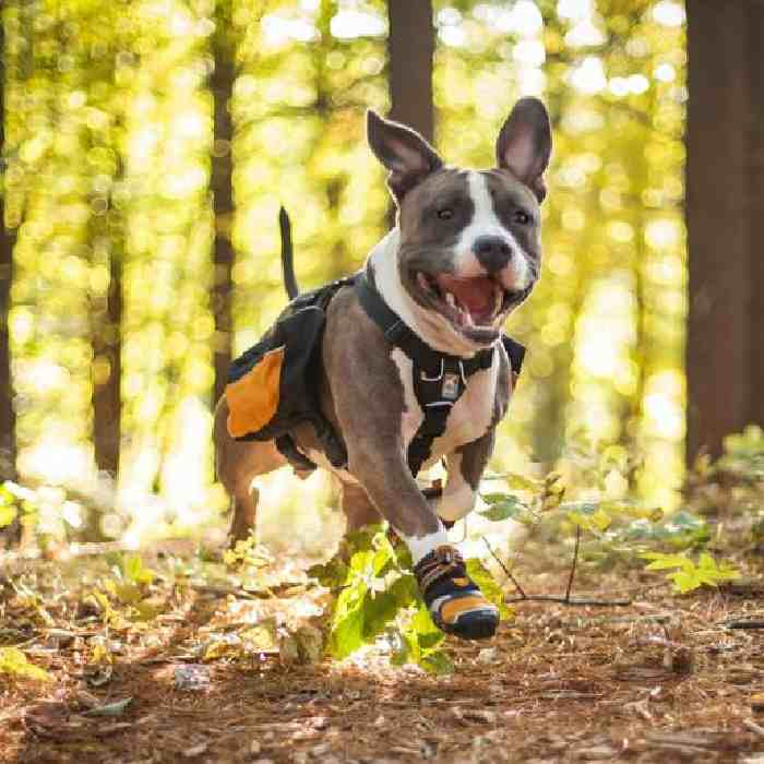Dog Shoes For Hiking in Summer