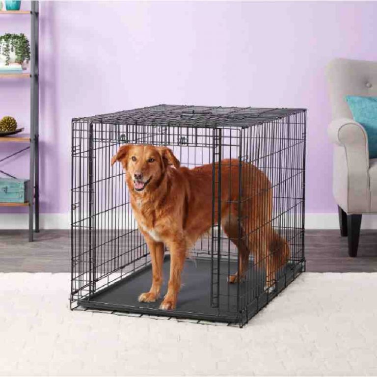 Midwest Collapsible Dog Crate for Large Dogs