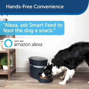 Petsafe Auto Pet Feeder - Handsfree convenience