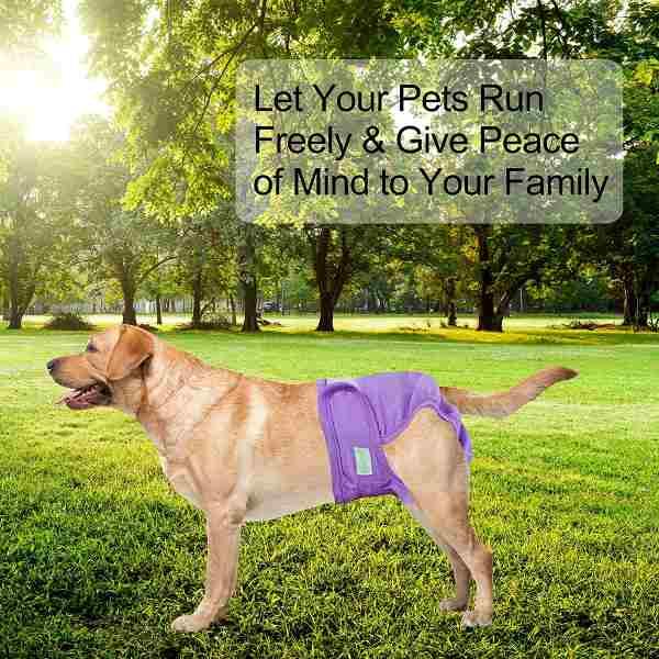 Washable Dog Diaper