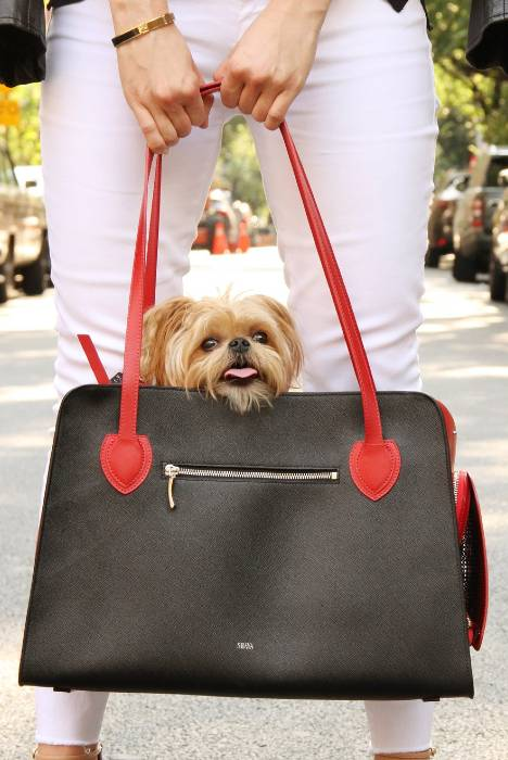 Dog carrier - red & black leather bag