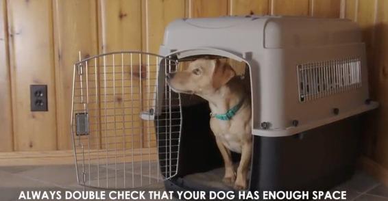 Petmate dog crate