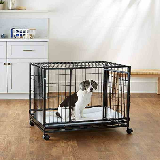 small dog sitting in a heavy duty dog crate