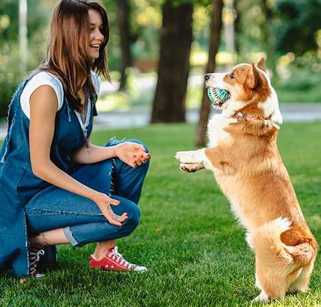Dog Whistles