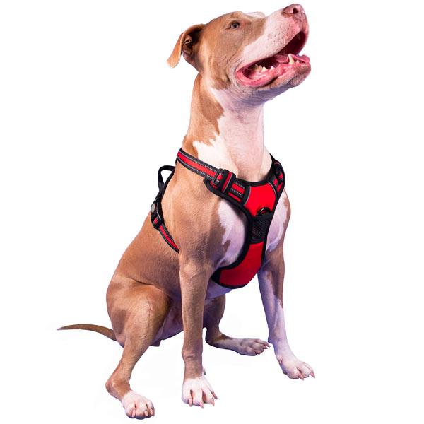 Choke-Free, No Pull Dog Harness