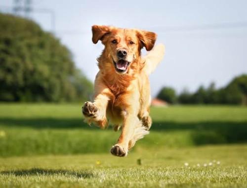 High Protein Dog Food image