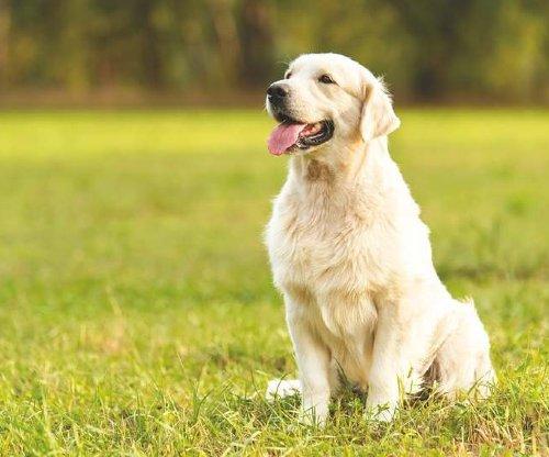 Hydrolyzed Protein Dog Food