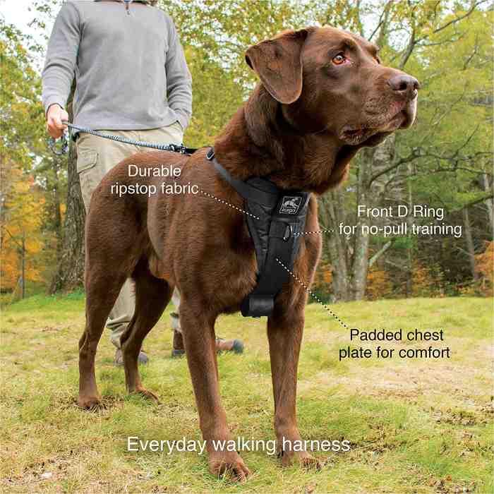 Kurgo Dog Harness for everyday walking