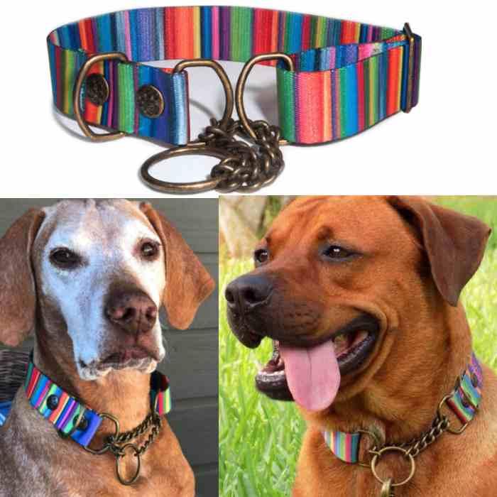 ane & Thor Kaleidoscope Polyester Martingale Dog Collar