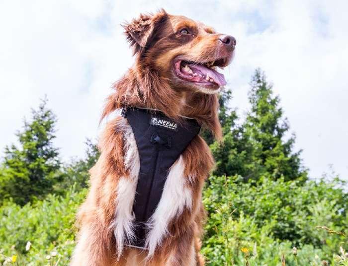Neewa No Pull Dog Harness