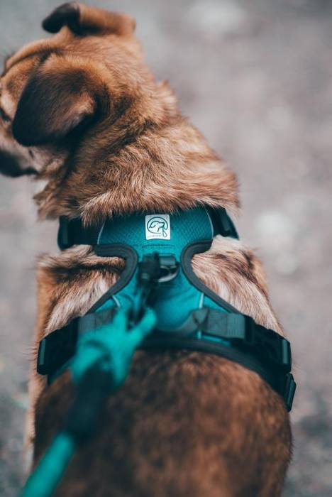 Ultra Comfort & Tough No-Pull Harness For Dog