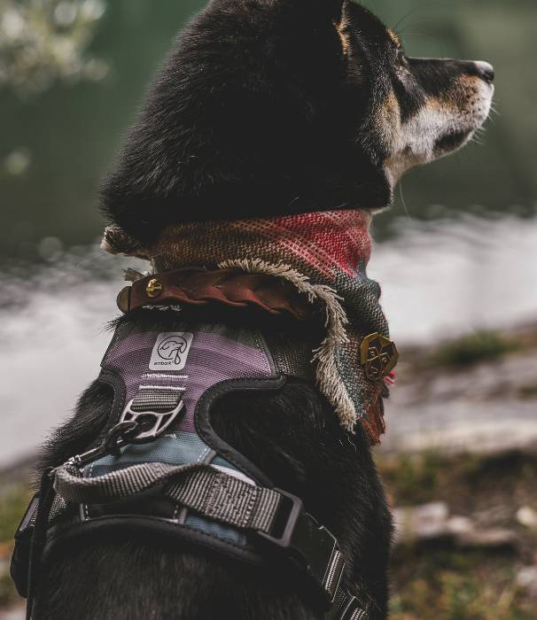 Read more about the article Dog Harness