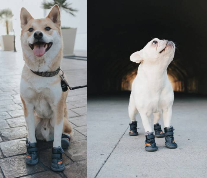 BELUGA Dog Shoes For Hot Summer