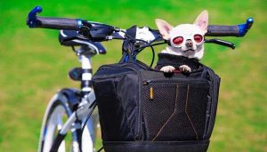 Best dogbasketfor bike