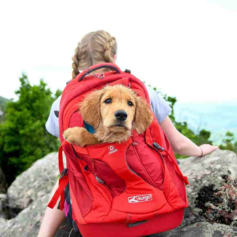 Kurgo Dog Carrier Backpack For Hiking with Small Dogs