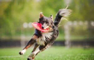 Sport dog food image