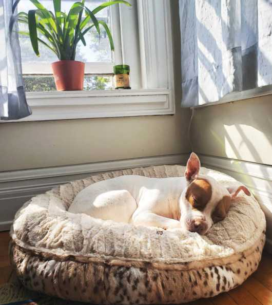 bessie and barnie calming dog bed