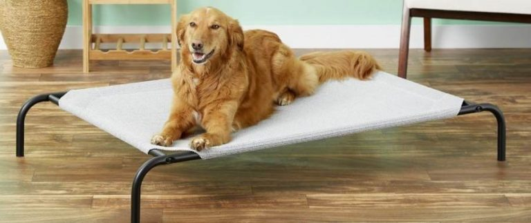 Read more about the article Elevated Dog Bed