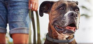 Flea collar for dogs