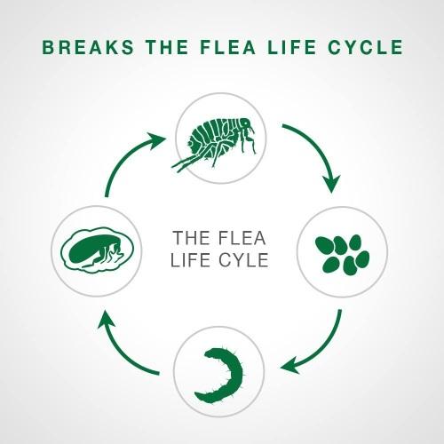 Flea treatment for dogs flea cycle
