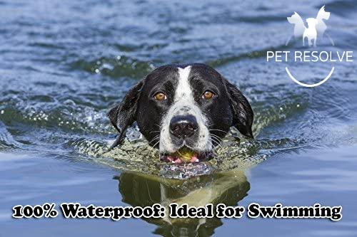 dog swimming with a waterproof training collar