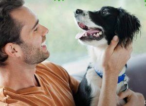 Dog Dental Chews image