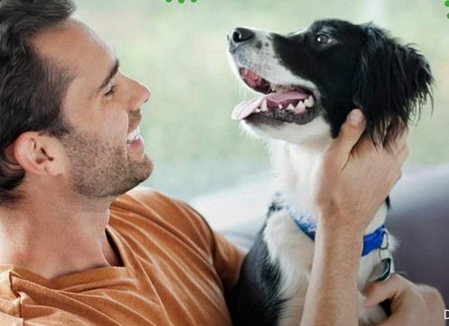 Best Dog Dental Chews