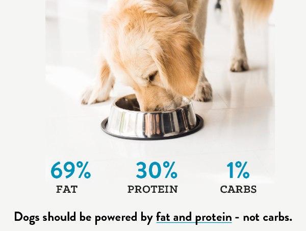 Low Carb Dog Food