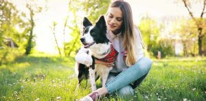 Best Dog Food For Dry Itchy Skin