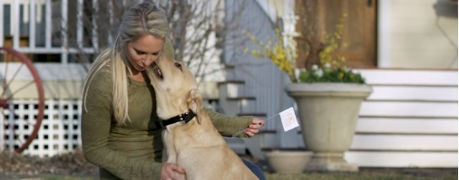 Read more about the article Electric Dog Fence