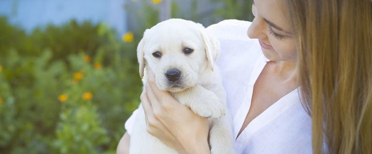 Read more about the article Dog Immune System Supplements