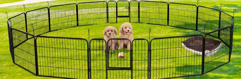 Read more about the article Portable Dog Fence