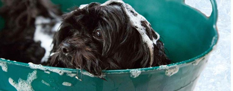 Read more about the article Puppy Shampoo