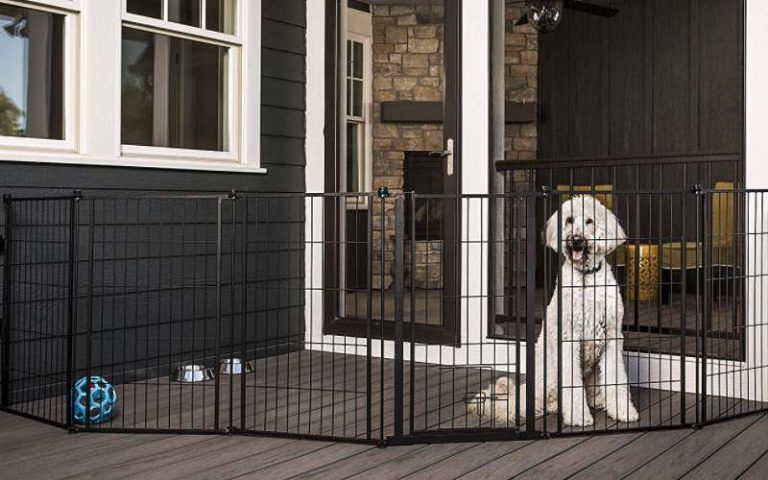 Read more about the article Outdoor Dog Gates