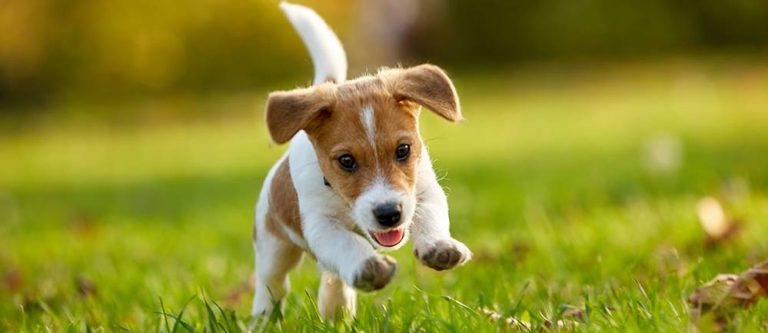 Read more about the article High Protein Puppy Food