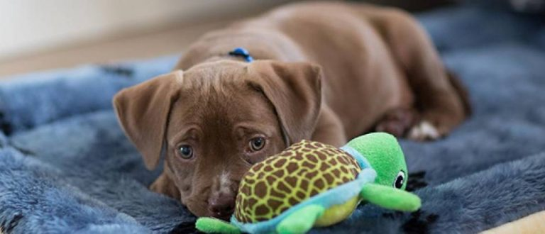 Read more about the article Puppy Food for Sensitive Stomach