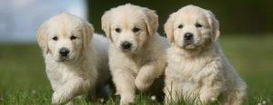 raw puppy food