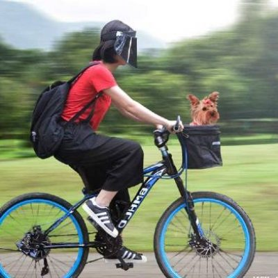 Best dog carrier for bike