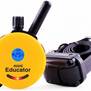 Educator shock collar