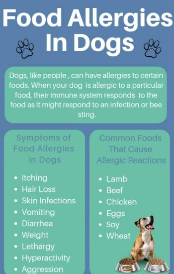 Food Allergies in Dogs image